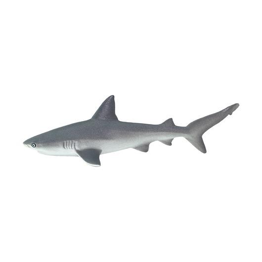 Серая рифовая акула