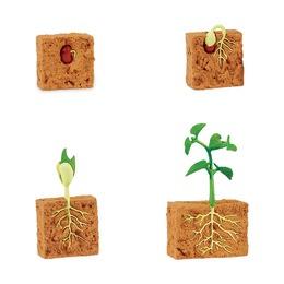 Набор Жизненный цикл зеленой фасоли