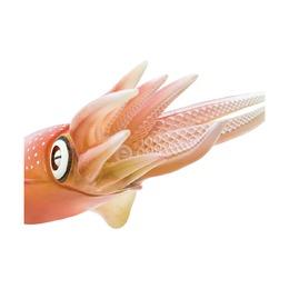 Рифовый кальмар XL