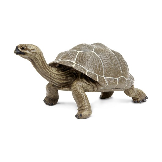 Сухопутная черепаха XL