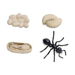 Набор Жизненный цикл муравья