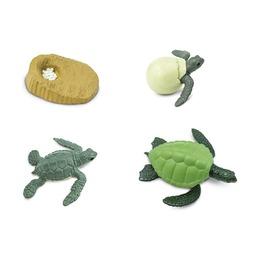 Набор Жизненный цикл зеленой морской черепахи