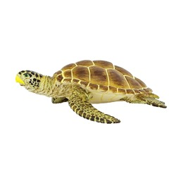 Черепаха Логгерхед
