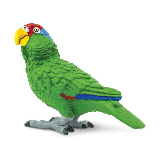 Попугай Зеленощекий амазон