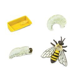 Жизненный цикл пчелы