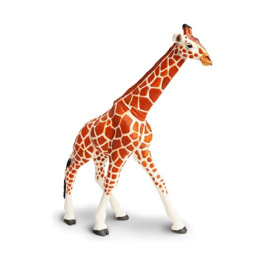 Сетчатый жираф, XL
