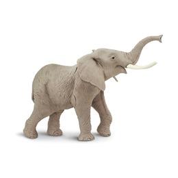 Африканский слон, XL