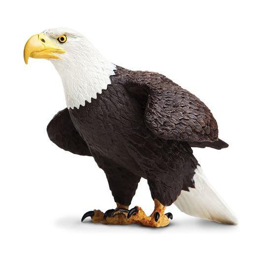 Белоголовый орлан, XL