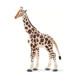 Жираф, XL