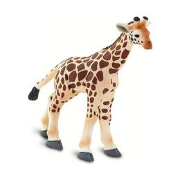 Жираф, детеныш