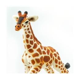 Сетчатый жираф, детеныш
