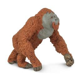 Орангутан, самец