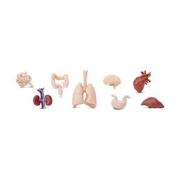 Набор Человеческие органы