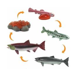 Набор Жизненный цикл лосося