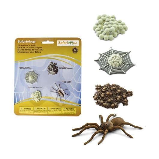 Набор Жизненный цикл паука