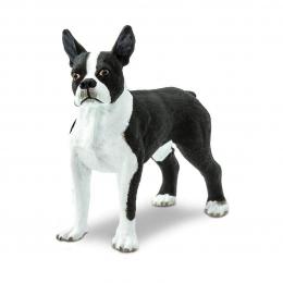 Собака Бостон-терьер